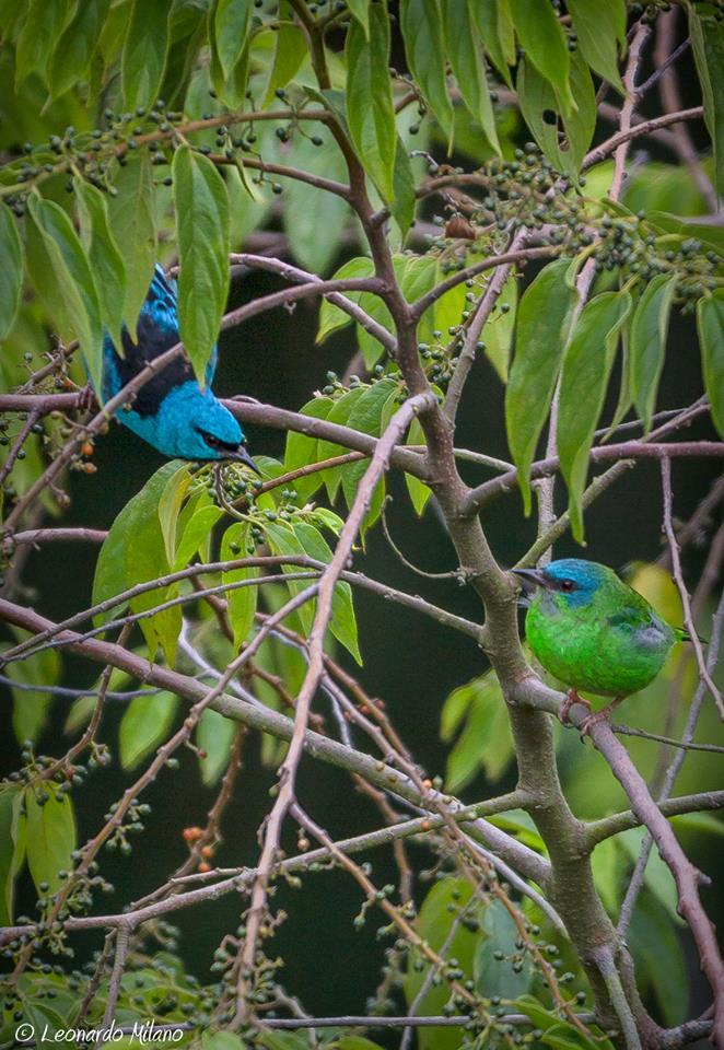 Observação de Aves no Parque Nacional da Tijuca