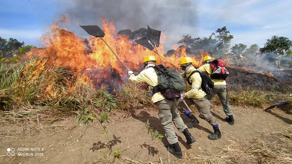 Brigadistas combatem, durante treinamento, incêndio em mata
